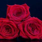 B(r)uchstücke der Literatur XLVI – Liebe